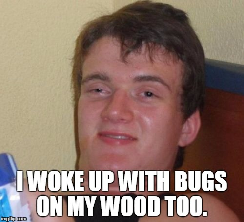 10 Guy Meme | I WOKE UP WITH BUGS ON MY WOOD TOO. | image tagged in memes,10 guy | made w/ Imgflip meme maker