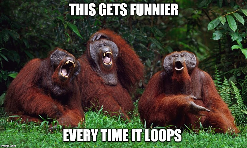 laughing orangutans | THIS GETS FUNNIER EVERY TIME IT LOOPS | image tagged in laughing orangutans | made w/ Imgflip meme maker