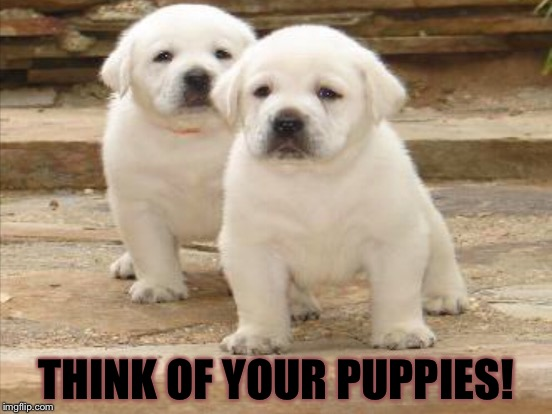 THINK OF YOUR PUPPIES! | made w/ Imgflip meme maker