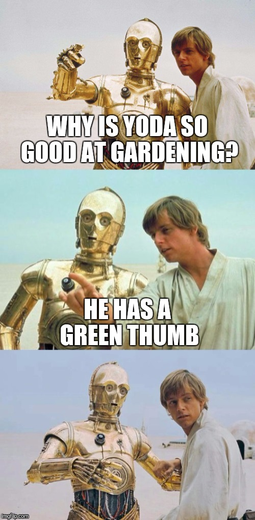 Bad Pun Luke Skywalker |  WHY IS YODA SO GOOD AT GARDENING? HE HAS A GREEN THUMB | image tagged in bad pun luke skywalker,star wars yoda,star wars,funny,yoda,bad pun | made w/ Imgflip meme maker