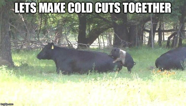 Bacon burger cow pig | LETS MAKE COLD CUTS TOGETHER | image tagged in bacon burger cow pig | made w/ Imgflip meme maker