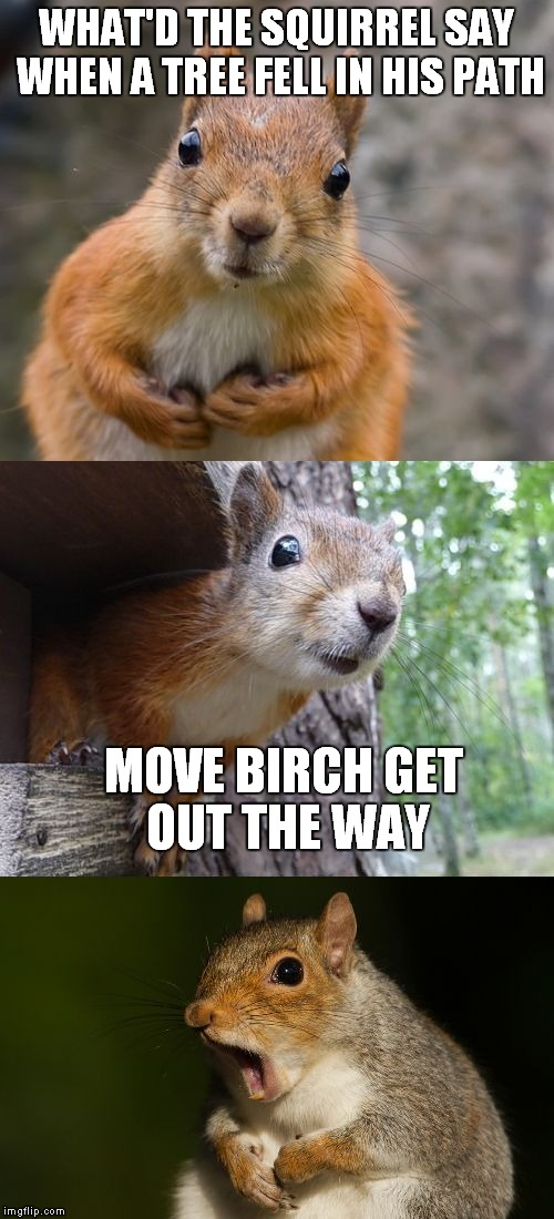 Bad pun week? That's just nuts! |  WHAT'D THE SQUIRREL SAY WHEN A TREE FELL IN HIS PATH; MOVE BIRCH GET OUT THE WAY | image tagged in bad pun squirrel | made w/ Imgflip meme maker