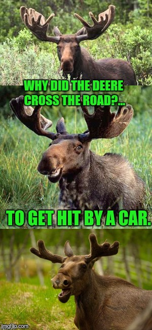 Bad Pun Moose; its that time of year folks...Deer season. |  WHY DID THE DEERE CROSS THE ROAD?... TO GET HIT BY A CAR. | image tagged in memes,funny,moose | made w/ Imgflip meme maker