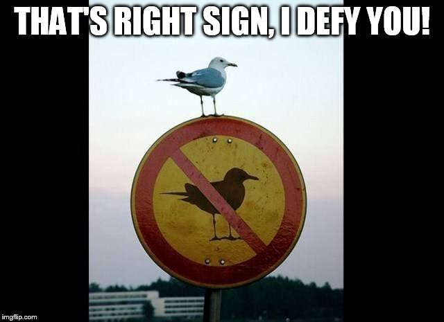 Rebel with a cause! | THAT'S RIGHT SIGN, I DEFY YOU! | image tagged in sign,seagull,rebel | made w/ Imgflip meme maker