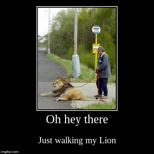 Oh hey there | Just walking my Lion | image tagged in funny,demotivationals | made w/ Imgflip demotivational maker
