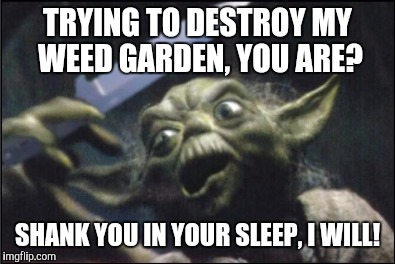Angry Yoda - Shank | TRYING TO DESTROY MY WEED GARDEN, YOU ARE? SHANK YOU IN YOUR SLEEP, I WILL! | image tagged in angry yoda - shank | made w/ Imgflip meme maker