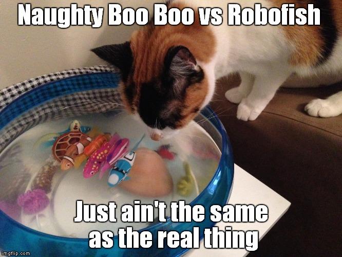 Funny Meme Naughty : Naughty boo cat vs robofish imgflip