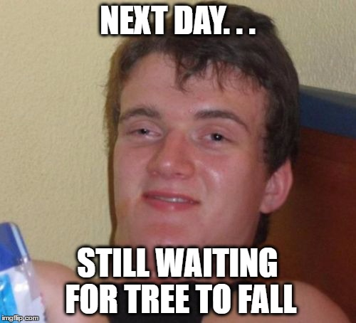 10 Guy Meme | NEXT DAY. . . STILL WAITING FOR TREE TO FALL | image tagged in memes,10 guy | made w/ Imgflip meme maker