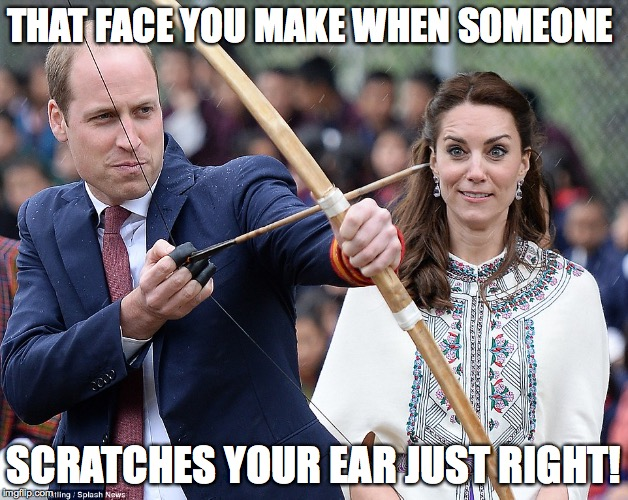 THAT FACE YOU MAKE WHEN SOMEONE SCRATCHES YOUR EAR JUST RIGHT! | image tagged in scratch | made w/ Imgflip meme maker