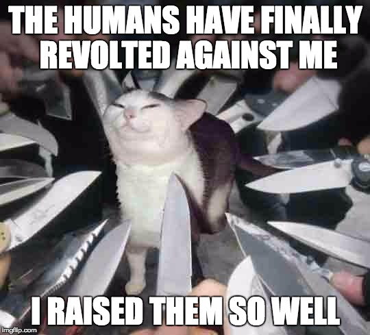 Revolution | THE HUMANS HAVE FINALLY REVOLTED AGAINST ME I RAISED THEM SO WELL | image tagged in knife cat,knives,cats,smug cat | made w/ Imgflip meme maker