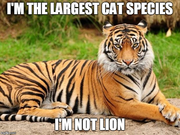 srsly tiger | I'M THE LARGEST CAT SPECIES I'M NOT LION | image tagged in srsly tiger,tiger,puns | made w/ Imgflip meme maker
