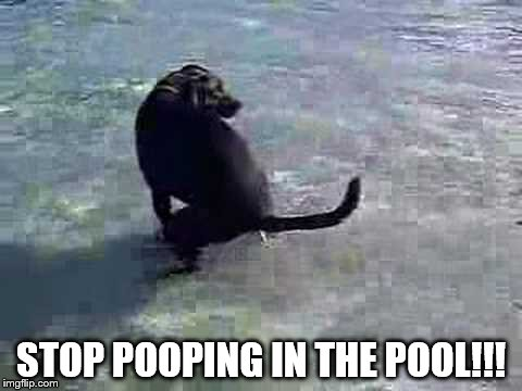 STOP POOPING IN THE POOL!!! | made w/ Imgflip meme maker