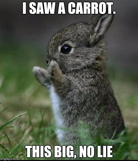 Cute Bunny | I SAW A CARROT. THIS BIG, NO LIE | image tagged in cute bunny | made w/ Imgflip meme maker