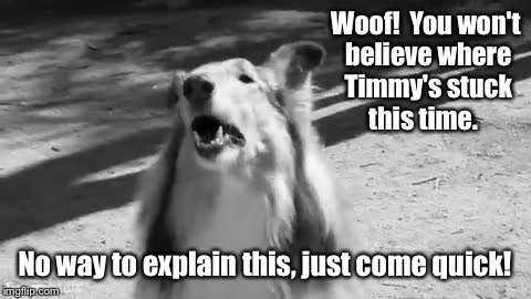Woof!  You won't believe where Timmy's stuck this time. No way to explain this, just come quick! | made w/ Imgflip meme maker