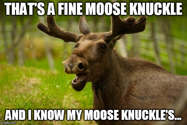 Bad Pun Moose |  THAT'S A FINE MOOSE KNUCKLE; AND I KNOW MY MOOSE KNUCKLE'S... | image tagged in bad pun moose | made w/ Imgflip meme maker