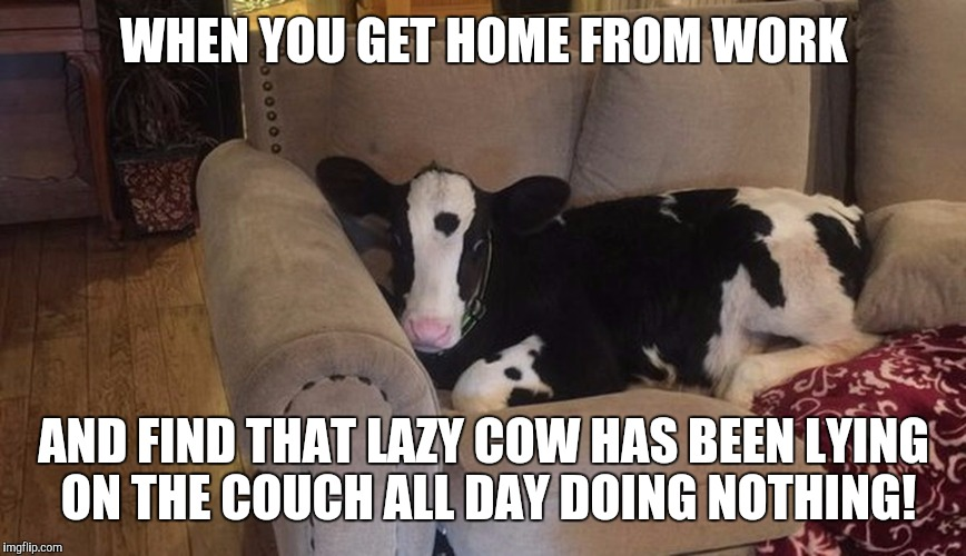 12leck lazy cow meme generator imgflip,Get Home Meme