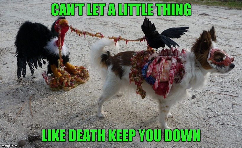 CAN'T LET A LITTLE THING LIKE DEATH KEEP YOU DOWN | made w/ Imgflip meme maker