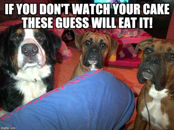 dogs | IF YOU DON'T WATCH YOUR CAKE THESE GUESS WILL EAT IT! | image tagged in dogs | made w/ Imgflip meme maker