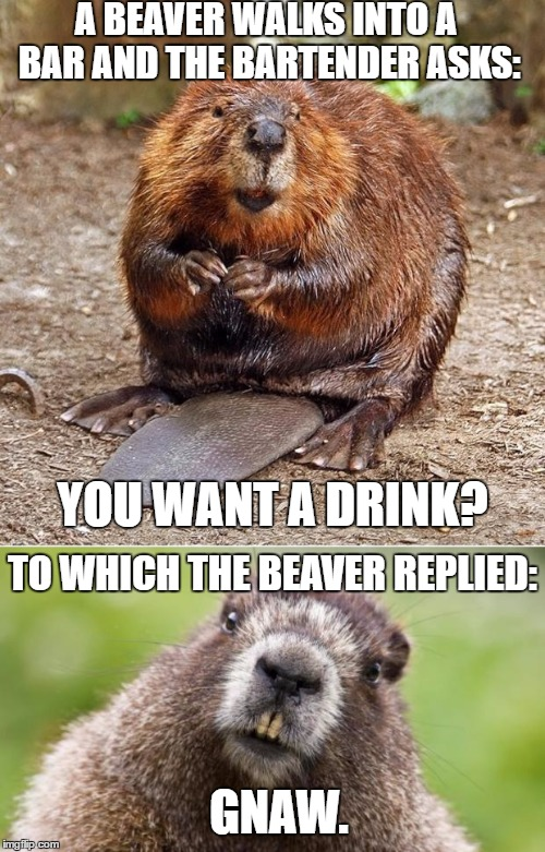 Bad Pun Beaver | A BEAVER WALKS INTO A BAR AND THE BARTENDER ASKS: YOU WANT A DRINK? TO WHICH THE BEAVER REPLIED: GNAW. | image tagged in bad pun beaver,memes,bad pun | made w/ Imgflip meme maker