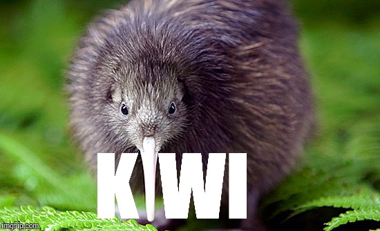Kiwi | K WI | image tagged in kiwi,new zealand | made w/ Imgflip meme maker