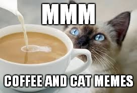 MMM COFFEE AND CAT MEMES | made w/ Imgflip meme maker