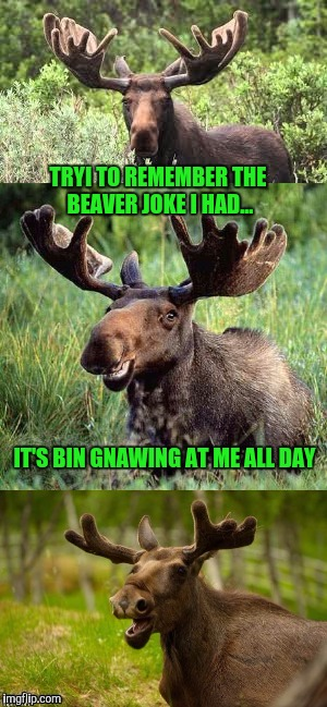 TRYI TO REMEMBER THE BEAVER JOKE I HAD... IT'S BIN GNAWING AT ME ALL DAY | made w/ Imgflip meme maker