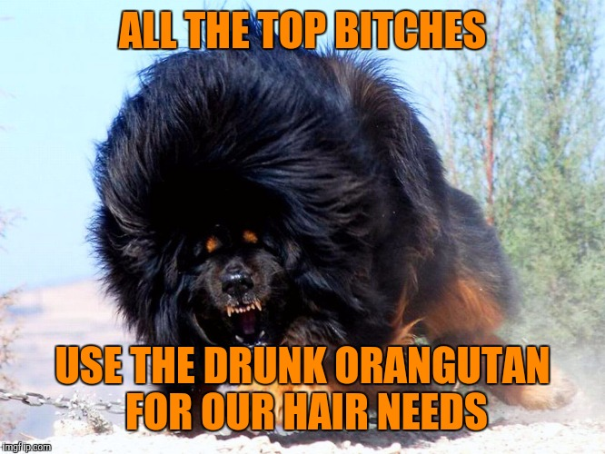 Fluffy wuffy | ALL THE TOP B**CHES USE THE DRUNK ORANGUTAN FOR OUR HAIR NEEDS | image tagged in fluffy wuffy | made w/ Imgflip meme maker