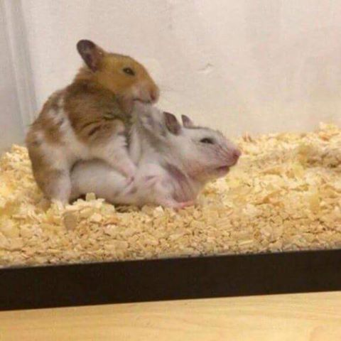 sex corsage sex hamster com