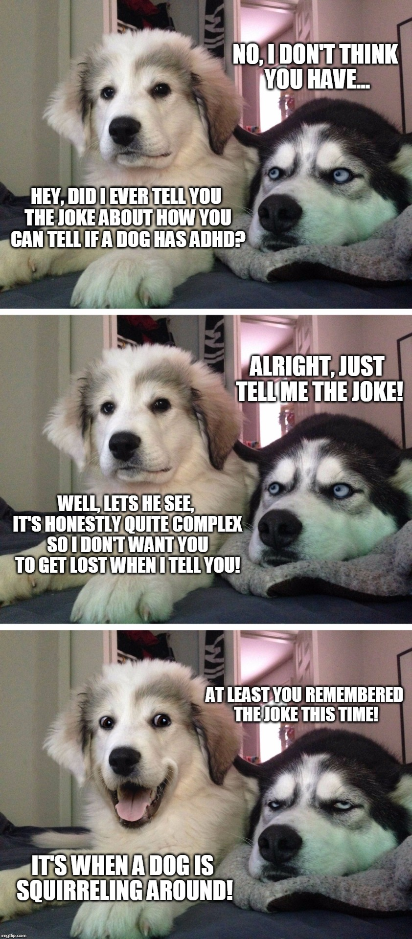 Bad Pun Dogs |  NO, I DON'T THINK YOU HAVE... HEY, DID I EVER TELL YOU THE JOKE ABOUT HOW YOU CAN TELL IF A DOG HAS ADHD? ALRIGHT, JUST TELL ME THE JOKE! WELL, LETS HE SEE, IT'S HONESTLY QUITE COMPLEX SO I DON'T WANT YOU TO GET LOST WHEN I TELL YOU! AT LEAST YOU REMEMBERED THE JOKE THIS TIME! IT'S WHEN A DOG IS SQUIRRELING AROUND! | image tagged in bad pun dogs,memes,bad pun,funny,original joke,adhd | made w/ Imgflip meme maker