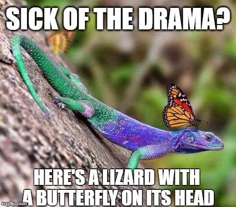 Butterfly Lizard | SICK OF THE DRAMA? HERE'S A LIZARD WITH A BUTTERFLY ON ITS HEAD | image tagged in butterfly lizard | made w/ Imgflip meme maker
