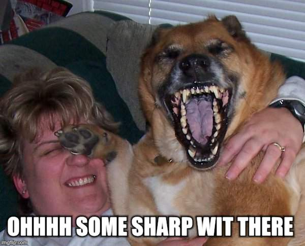 laughing dog | OHHHH SOME SHARP WIT THERE | image tagged in laughing dog | made w/ Imgflip meme maker