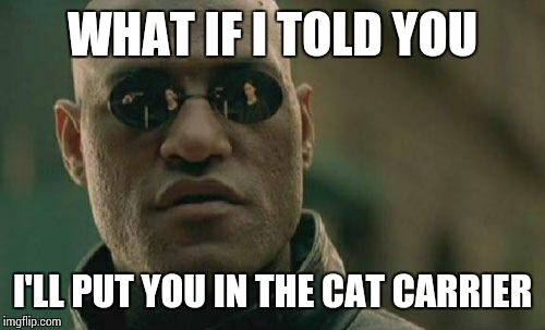 Matrix Morpheus Meme | WHAT IF I TOLD YOU I'LL PUT YOU IN THE CAT CARRIER | image tagged in memes,matrix morpheus | made w/ Imgflip meme maker