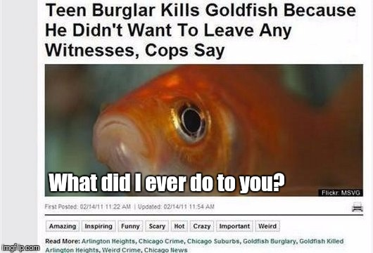 Is This Guy For Real? | What did I ever do to you? | image tagged in memes,funny,what did i ever do to you,goldfish,animals,th3_h4ck3r | made w/ Imgflip meme maker