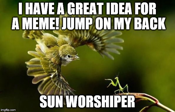I HAVE A GREAT IDEA FOR A MEME! JUMP ON MY BACK SUN WORSHIPER | image tagged in airstrike | made w/ Imgflip meme maker