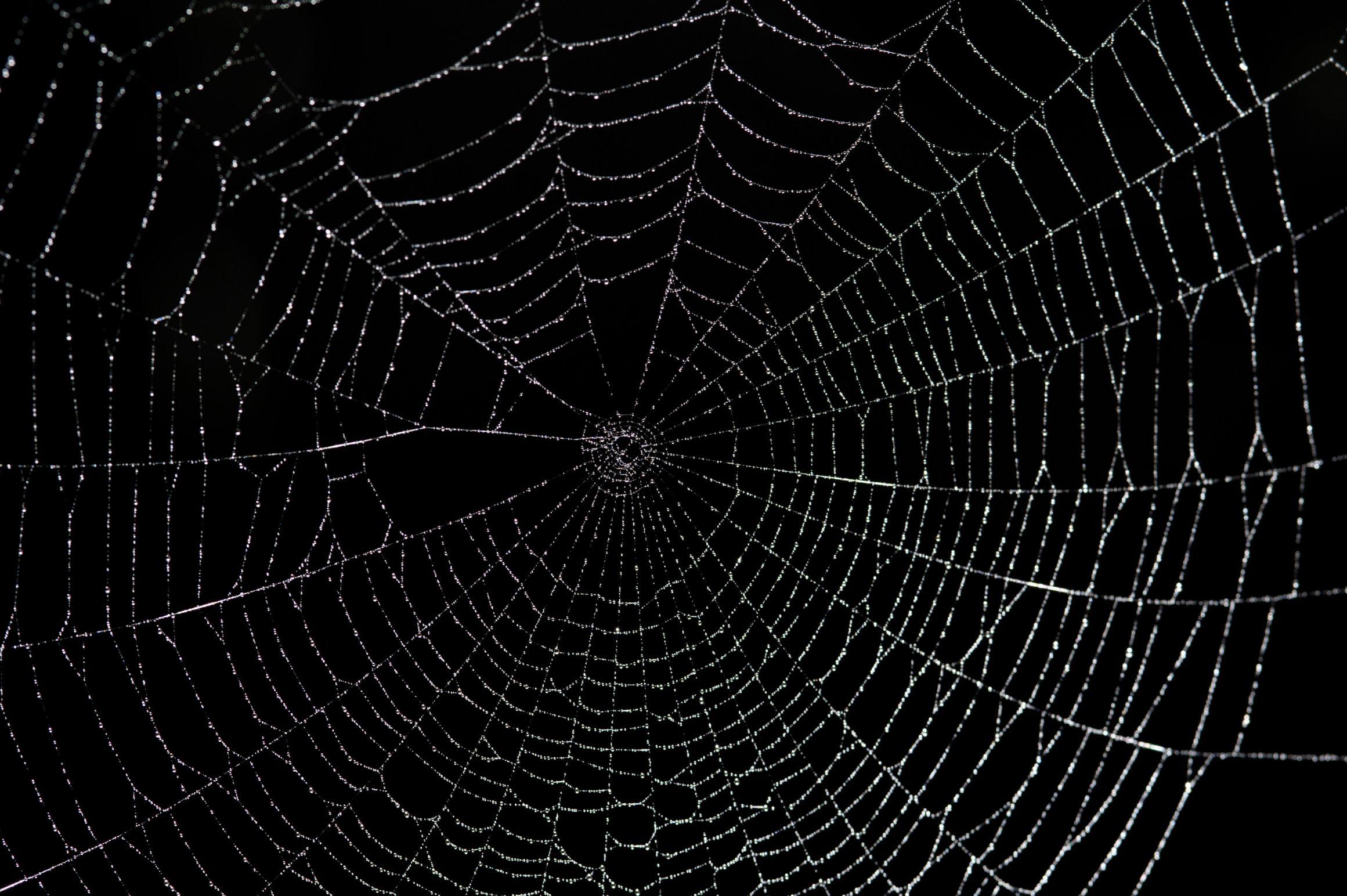 Spider Web Meme Generator - Imgflip