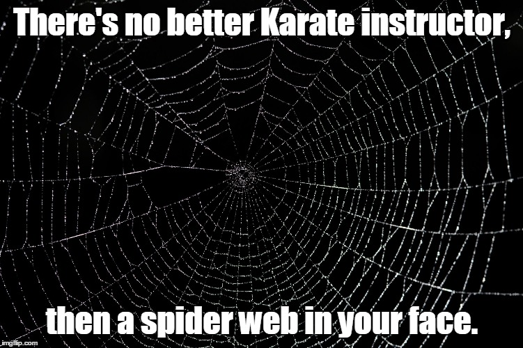 spider web Memes & GIFs - Imgflip