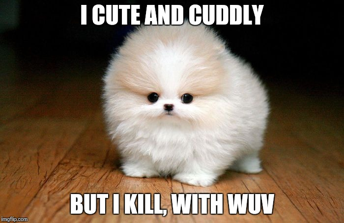 Derp Doge |  I CUTE AND CUDDLY; BUT I KILL, WITH WUV | image tagged in derp doge | made w/ Imgflip meme maker