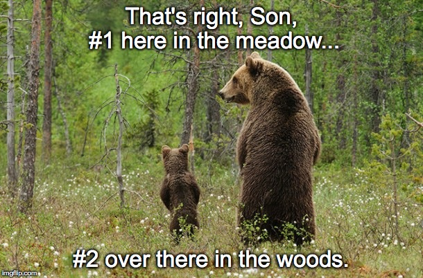 Tell me again, Dad. | That's right, Son, #1 here in the meadow... #2 over there in the woods. | image tagged in bear,woods,bear in the woods,2 | made w/ Imgflip meme maker