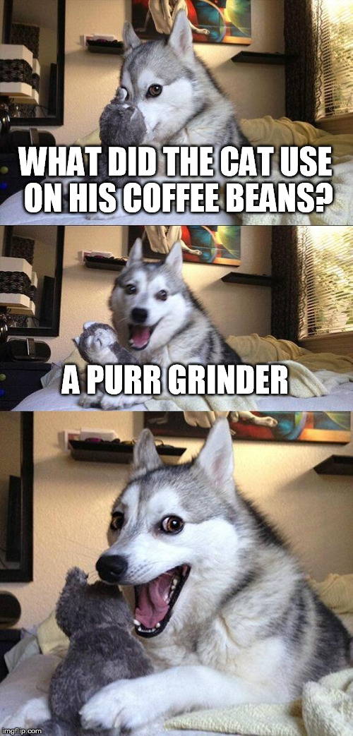 Good pun dog ....  |  WHAT DID THE CAT USE ON HIS COFFEE BEANS? A PURR GRINDER | image tagged in memes,bad pun dog | made w/ Imgflip meme maker