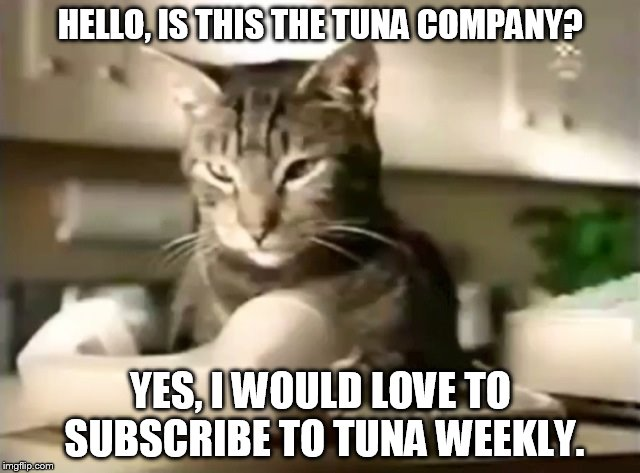 The Tuna Company | HELLO, IS THIS THE TUNA COMPANY? YES, I WOULD LOVE TO SUBSCRIBE TO TUNA WEEKLY. | image tagged in cat telephone,memes,tabby cat,meow mix,grey tabby,cat food | made w/ Imgflip meme maker