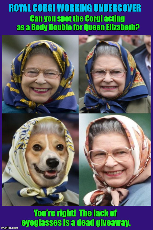 Royal Corgi Working Undercover For The Queen? |  ROYAL CORGI WORKING UNDERCOVER; Can you spot the Corgi acting as a Body Double for Queen Elizabeth? You're right!  The lack of eyeglasses is a dead giveaway. | image tagged in corgi,pembroke welsh corgi,dogs,queen elizabeth,royal family,body double | made w/ Imgflip meme maker