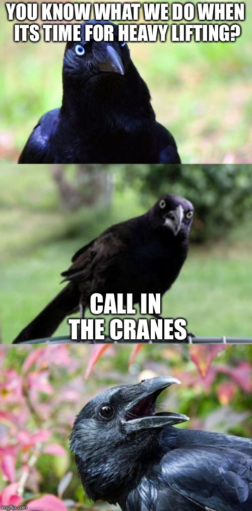 bad pun crow | YOU KNOW WHAT WE DO WHEN ITS TIME FOR HEAVY LIFTING? CALL IN THE CRANES | image tagged in bad pun crow | made w/ Imgflip meme maker