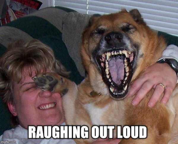 laughing dog | RAUGHING OUT LOUD | image tagged in laughing dog | made w/ Imgflip meme maker
