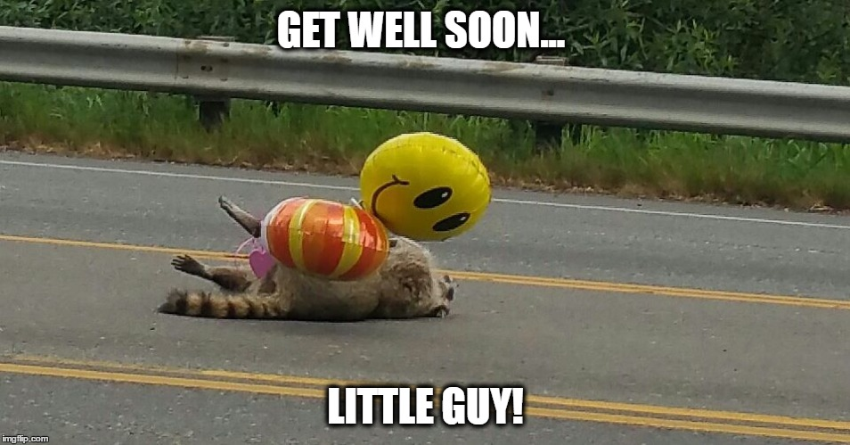 Get well soon | GET WELL SOON... LITTLE GUY! | image tagged in roadkill,raccoon,get well soon | made w/ Imgflip meme maker