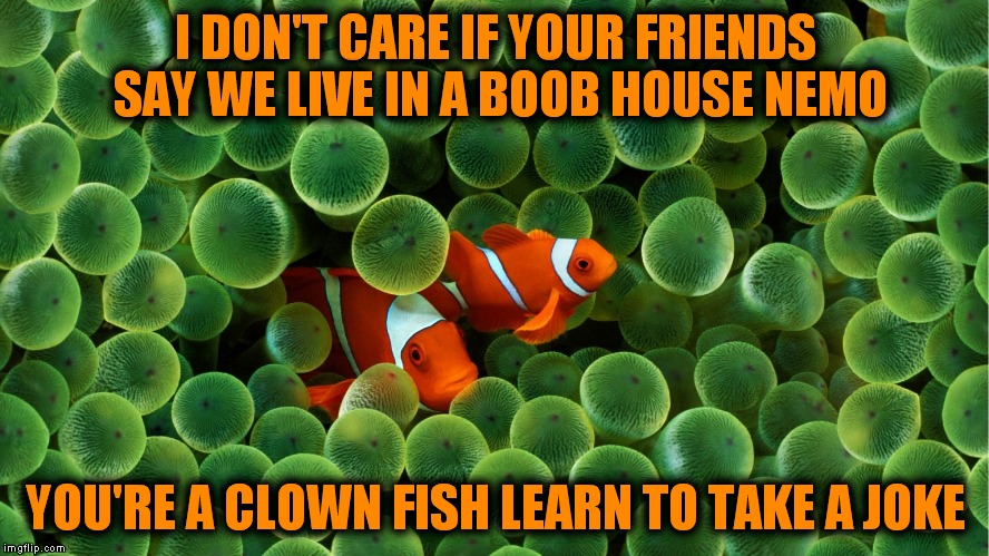 Looks like nemo is a bit sensitive.. | I DON'T CARE IF YOUR FRIENDS SAY WE LIVE IN A BOOB HOUSE NEMO YOU'RE A CLOWN FISH LEARN TO TAKE A JOKE | image tagged in nemo,sad clown,bullying,get over it | made w/ Imgflip meme maker