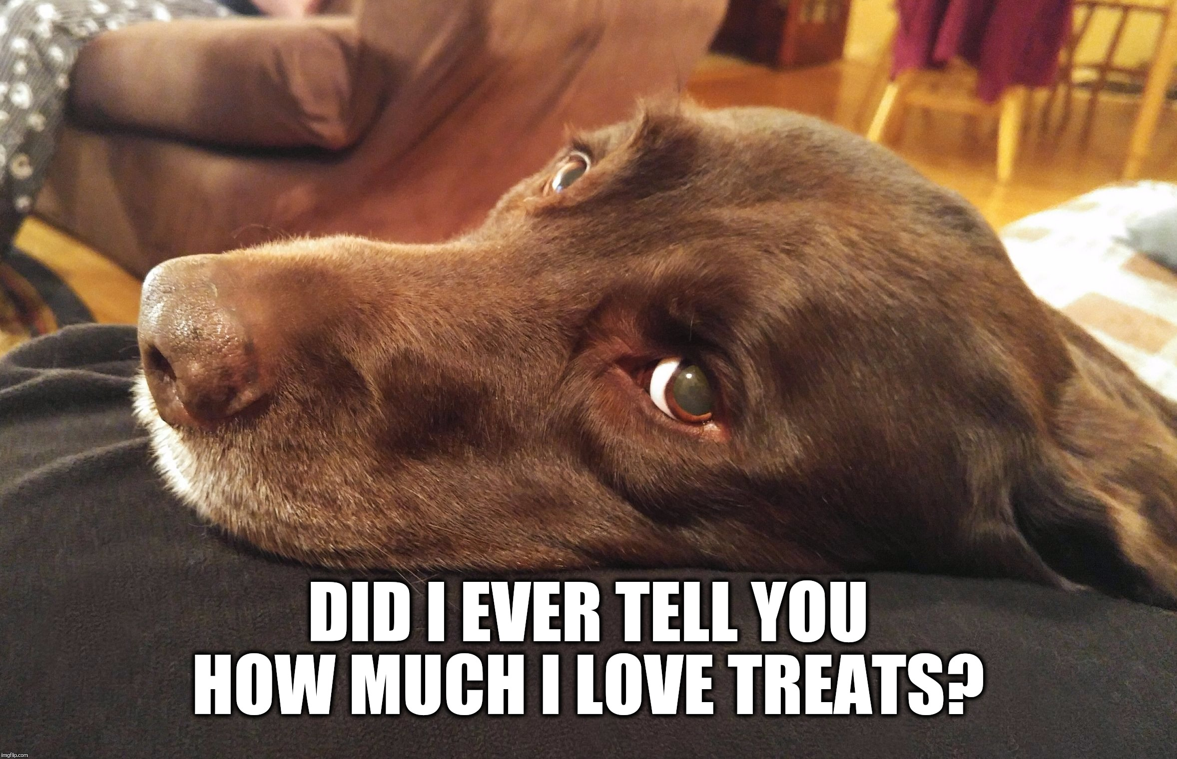 Funny Memes About Love : Chuckie the chocolate lab memes imgflip