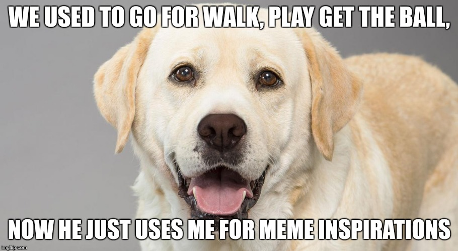 WE USED TO GO FOR WALK, PLAY GET THE BALL, NOW HE JUST USES ME FOR MEME INSPIRATIONS | made w/ Imgflip meme maker