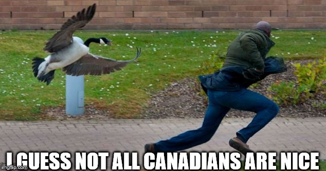 Image result for canada geese meme