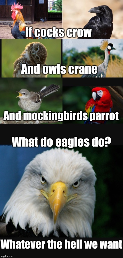 If cocks crow And owls crane And mockingbirds parrot What do eagles do? Whatever the hell we want | made w/ Imgflip meme maker