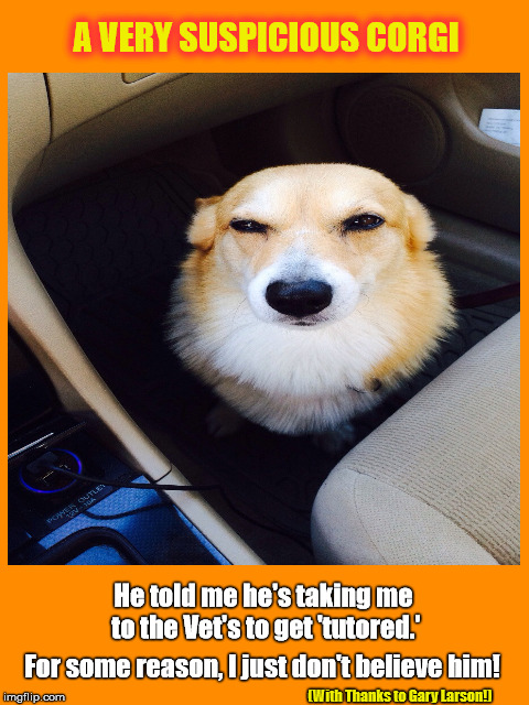 A Very Suspicious Corgi |  (With Thanks to Gary Larson!) | image tagged in corgi,suspicious,going to the vet's,tutored,gary larson,dog | made w/ Imgflip meme maker